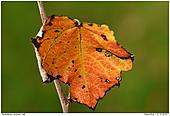 Herbstlaub - Herbstlaub