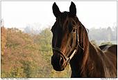 Pferd - Pferd
