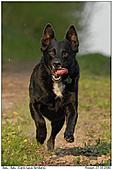 Hund - Balu gibt Gas - Hund