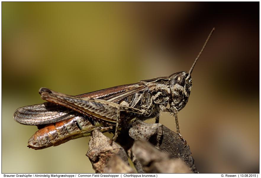 Insekten lexikon online dating