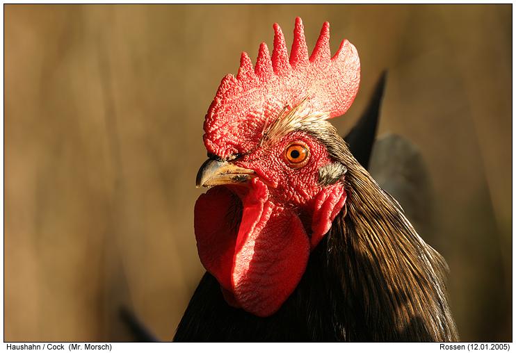 Hühner  Vom Ei zum Küken Sachunterricht in der Volksschule