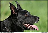 Hund - Mein Hund Balu
