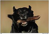 Hund - Osterspa� mit Balu