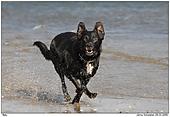 Hund - Spass am Strand