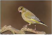 Gr�nfink - Gr�nfink