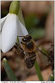 Honigbiene - Endlich