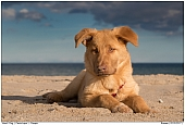 Hund - Hund Peppie