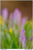 Frühling - Frühling
