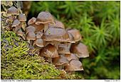 Unbestimmter Pilz - Pilzgruppe am Baumstumpf