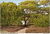 Dänemark - Rømø - Landschaft auf Römö