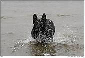 Hund - Balu - Wasserspass