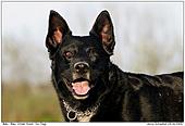 Hund - Balu