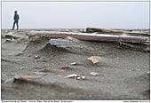 Schwertmuschel - Schwertmuschel am Strand